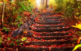Znalezione obrazy dla zapytania jesień liście