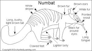 Image result for Numbats/ woodlands