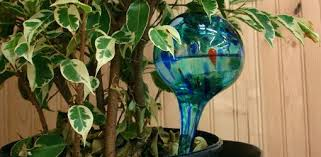 Image result for PHOTO plant watering bubble