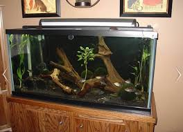 Image result for aquarium wood