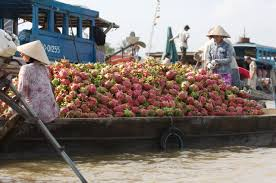 produce clerk the produce clerks handbook by rick chong dragon fruit going to market