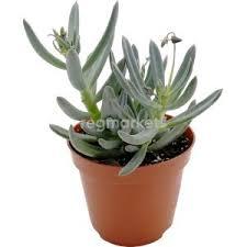 <b>Растения</b> Крестовник в Белгороде (2000 товаров) 🥇