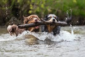 fun teamwork drills to create collaboration inspire business 3 fun teamwork drills to create collaboration inspire business success