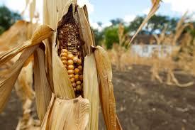 food shortage essay food shortage