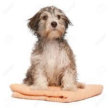 Resultado de imagen de perro mojado