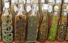 Image result for Snake wine