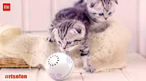 <b>Xiaomi Petoneer</b> Pet <b>smart</b> companion ball Cat Toy. - YouTube