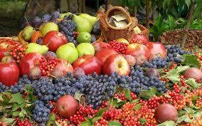 """Résultat de recherche d'images pour """"fructe, seminte, legume"""""""