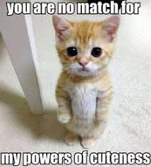 Cute Memes on Pinterest | Animal Memes, Funny Cat Humor and Pet Memes via Relatably.com