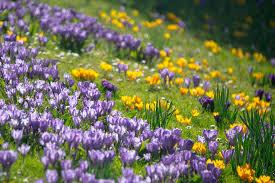"""Résultat de recherche d'images pour """"printemps"""""""