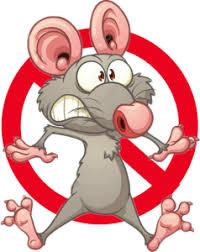 شركات ابادة الفئران بجدة