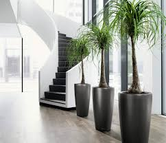 charming modern indoor plants and tall gardening review design wall planters ideas image also a simple charming office plants