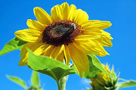 Image result for images flowers