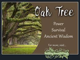 Image result for oak tree