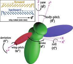 Predicting <b>fruit</b> fly's sensing rate with insect flight <b>simulations</b> | PNAS