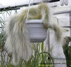 Bergamo <b>Cactus</b> e Dintorni - Collezione Privata, <b>hildewintera</b> ...