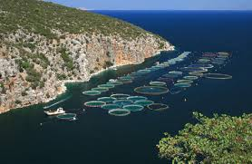 Image result for fish farm