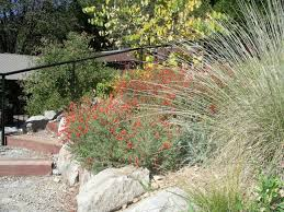 Small Picture Modren California Native Plants For The Garden Meadow In Spring Of