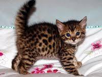 500+ <b>Cute Cats</b> ideas   <b>cute cats</b>, cats, crazy cats