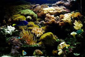 living reef aquarium office the aquatic design centre adc aquarium design bespoke aquariums aquarium office