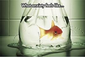 Funniest_Memes_what-anxiety-feels-like_18619.jpeg via Relatably.com