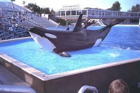 Resultado de imagem para fotos de orcas