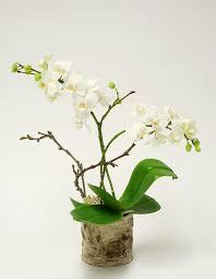<b>Luxury</b> Orchid <b>Plants</b> - Orchidya London Flower Shop