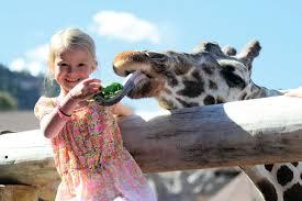 Welcome to Cheyenne Mountain Zoo - CMZoo