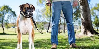 The best <b>dog muzzle</b> of 2019: Baskerville Basket <b>Muzzle</b> - Business ...