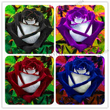Sale!<b>200 pcs/bag rose</b> flores, Black Rose with White Red Edge ...