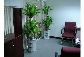 cây trồng trong văn phòng