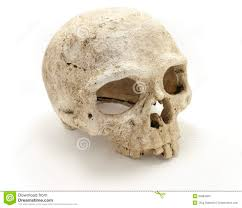 Image result for bones skull
