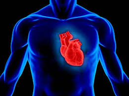 essay on human heart useful notes on the structure of human heart
