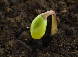 Image result for budding plants in garden