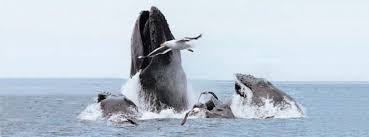 Image result for Boston Harbor Whale Watch Cruise