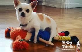 Похотливые собаки украсили упаковку <b>шампуней</b> в День Всех ...