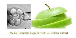 Image result for malus domestica fruit cell culture extract