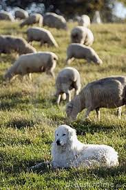 """"""" Διαχωρίζει  τα πρόβατα από τα ερίφια""""..."""