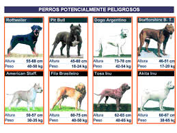 seguros perros potencialmente peligrosos