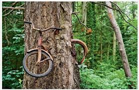 תוצאת תמונה עבור abandoned tree