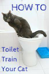 tired of scooping the litter box hate that litter box smell potty train your bookcase climber litter box