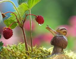 A Magical Miniature World Of <b>Snails</b> By Vyacheslav Mishchenko ...