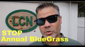 How To Get Rid Of Annual Bluegrass (Poa Annua) In Your Lawn ...