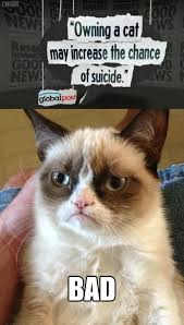 The No Grumpy Cat | Reverse Memes | Know Your Meme via Relatably.com