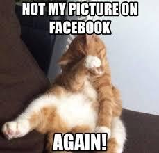 10+ Funny Cat Memes 2015 - Cute Cat Pictures, Photos & Pics via Relatably.com