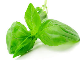 Image result for kesar and basil leaves