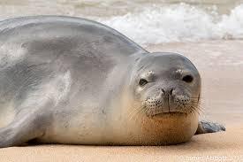 10 Cute Animals in <b>Hawaii</b> to Greet You Aloha | <b>Hawaii</b>.com