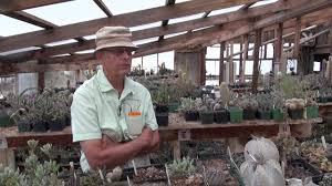joseph simcox botanical explorer interviews steve brack of mesa joseph simcox botanical explorer interviews steve brack of mesa gardens succulent nursery