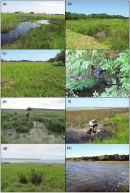 examples of the wetland habitat types encountered in the st