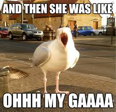 Overly Dramatic Seagull memes | quickmeme via Relatably.com